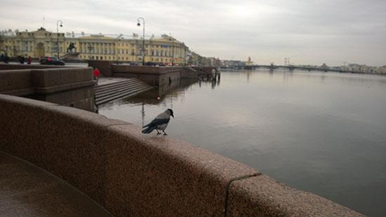 птицы в санкт-петербурге