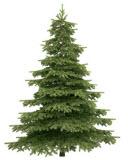 Натуральная елка