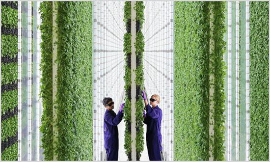 Кто такие Вертикальные фермеры