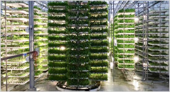 Вертикальное земледелие